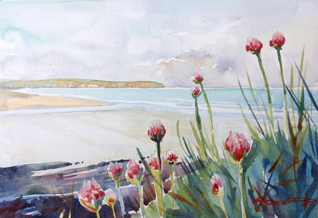 Spring Sea Pinks - Woolacombe print edition from Steve PP Fine Art